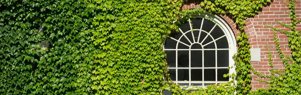 Ivy-covered wall with a window